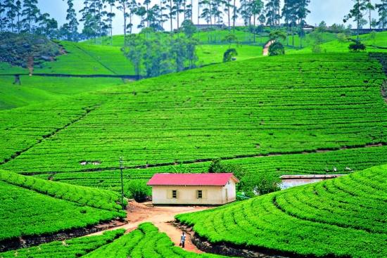 Шри Ланка.