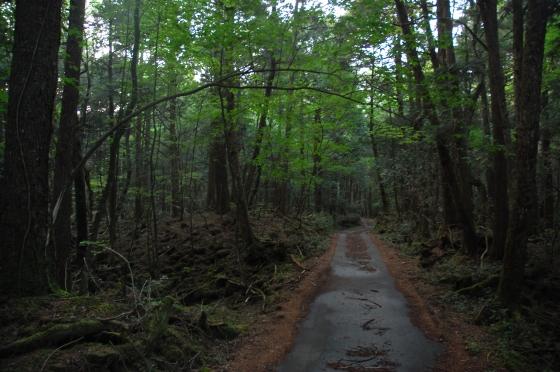Лес Аокигахара в Японии.