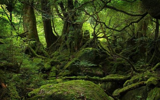 Аокигахара или Дзюкай - Море деревьев.