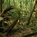Аокигахара — лес окутанный тайнами и мрачными легендами