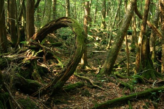 Аокигахара - мрачный лес.