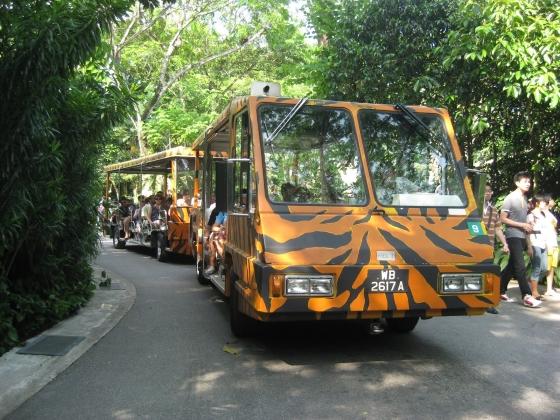Сингапурский зоопарк действительно один из лучших в мире.