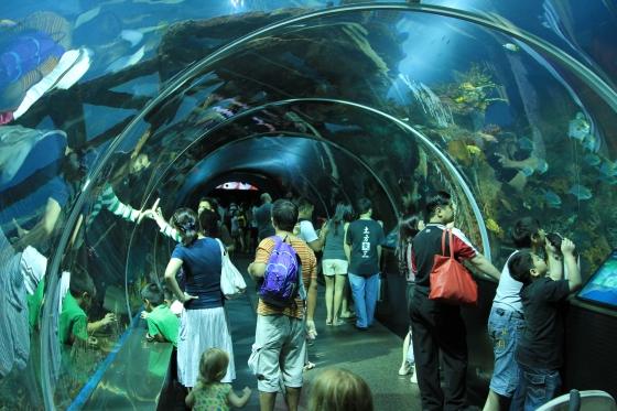 Сингапурский океанариум - Морская жизнь.