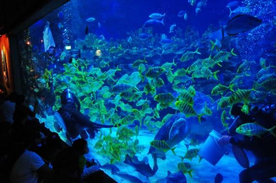 Океанариум Куала Лумпура.