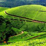 Штат Керала — источник знаний аюрведы в Индии