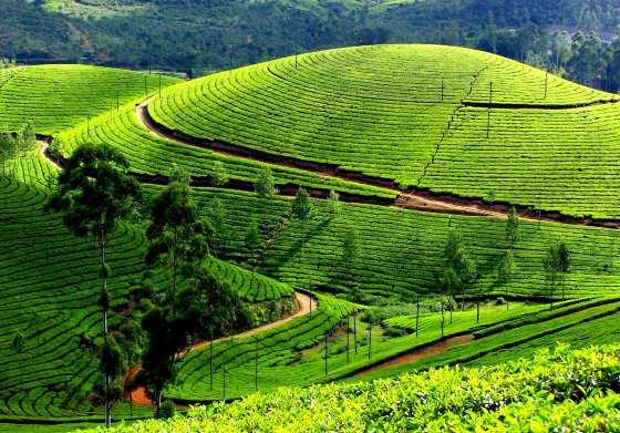 Уникальная природа Штата Керала