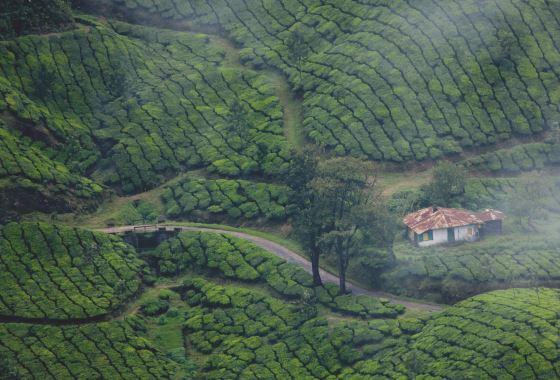 Природа Кералы - сезон дождей