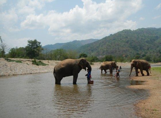 Слоны на реке Квай