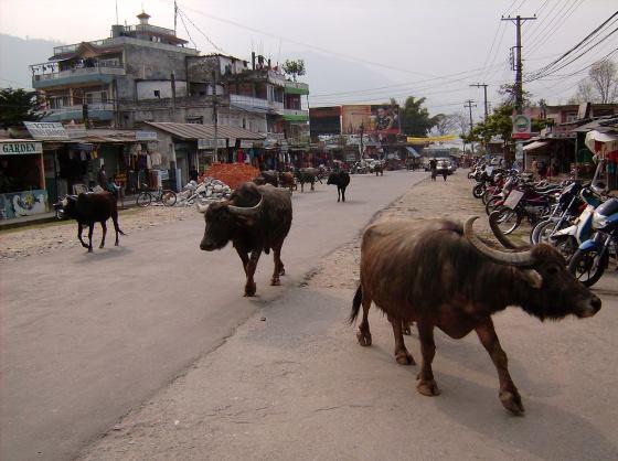 В городе Покхара фотография.