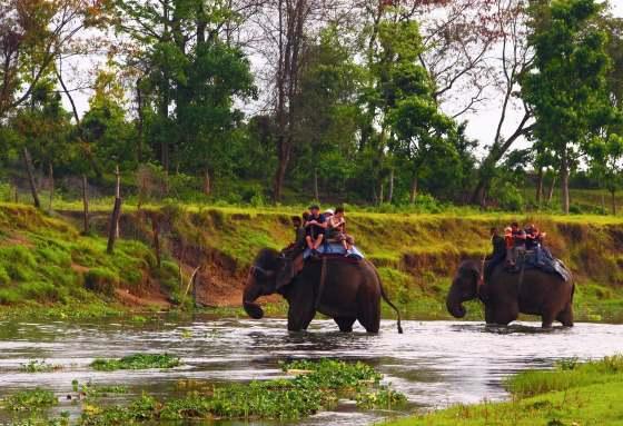 Прогулка на слонах средство передвижения в Читване.
