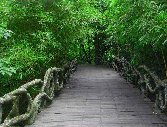 Прогуливаясь по парку Янода, лесная тропинка.